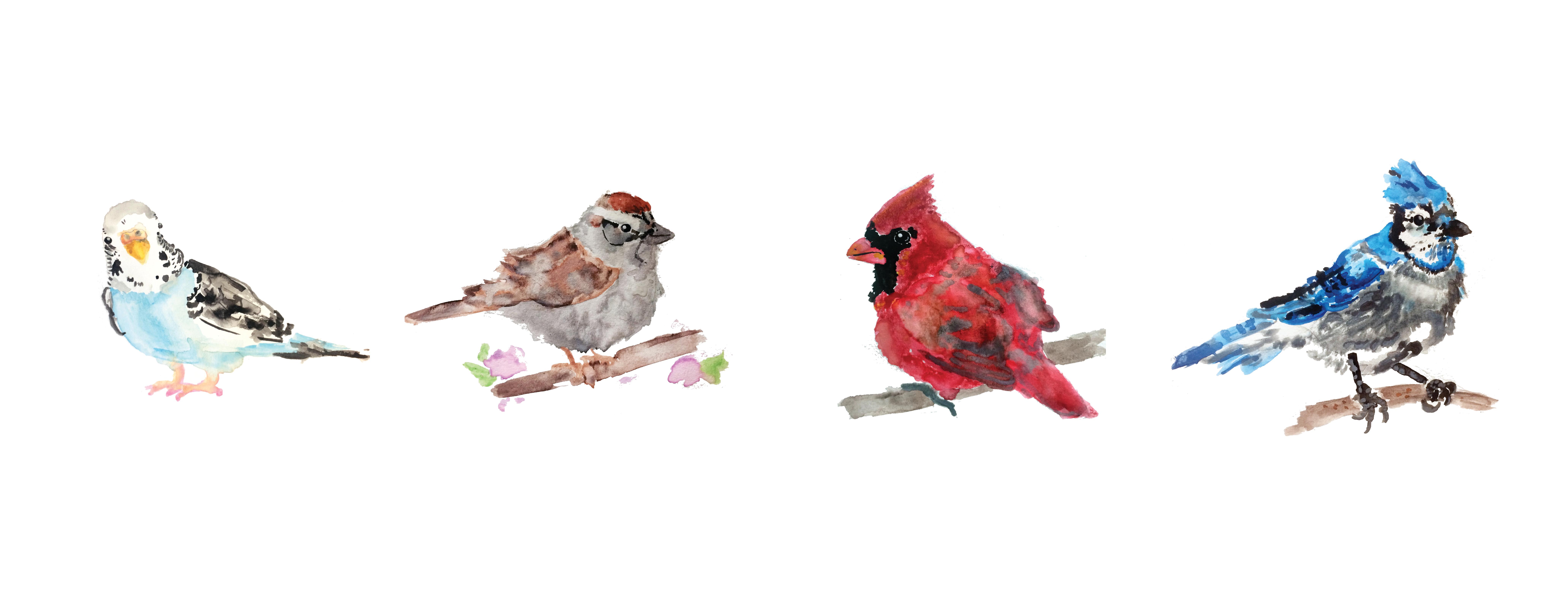 birds-birds-birds_1@4x